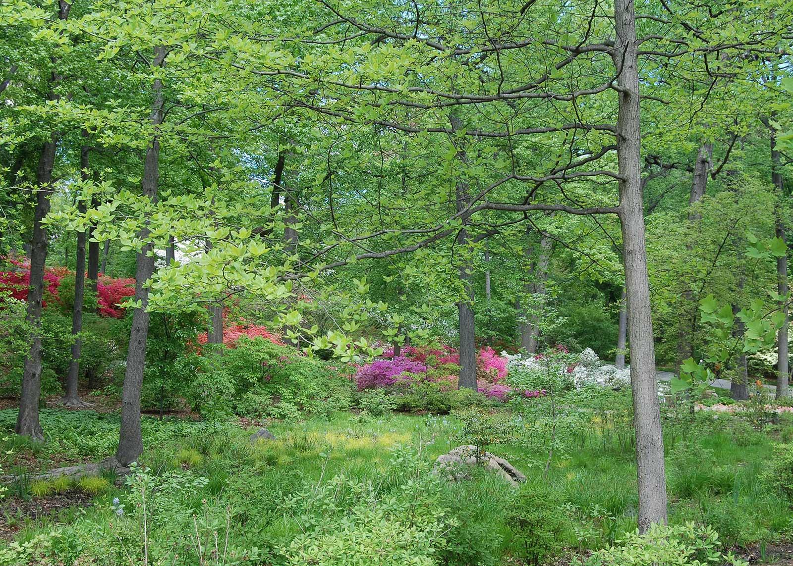 Azalea Garden 2