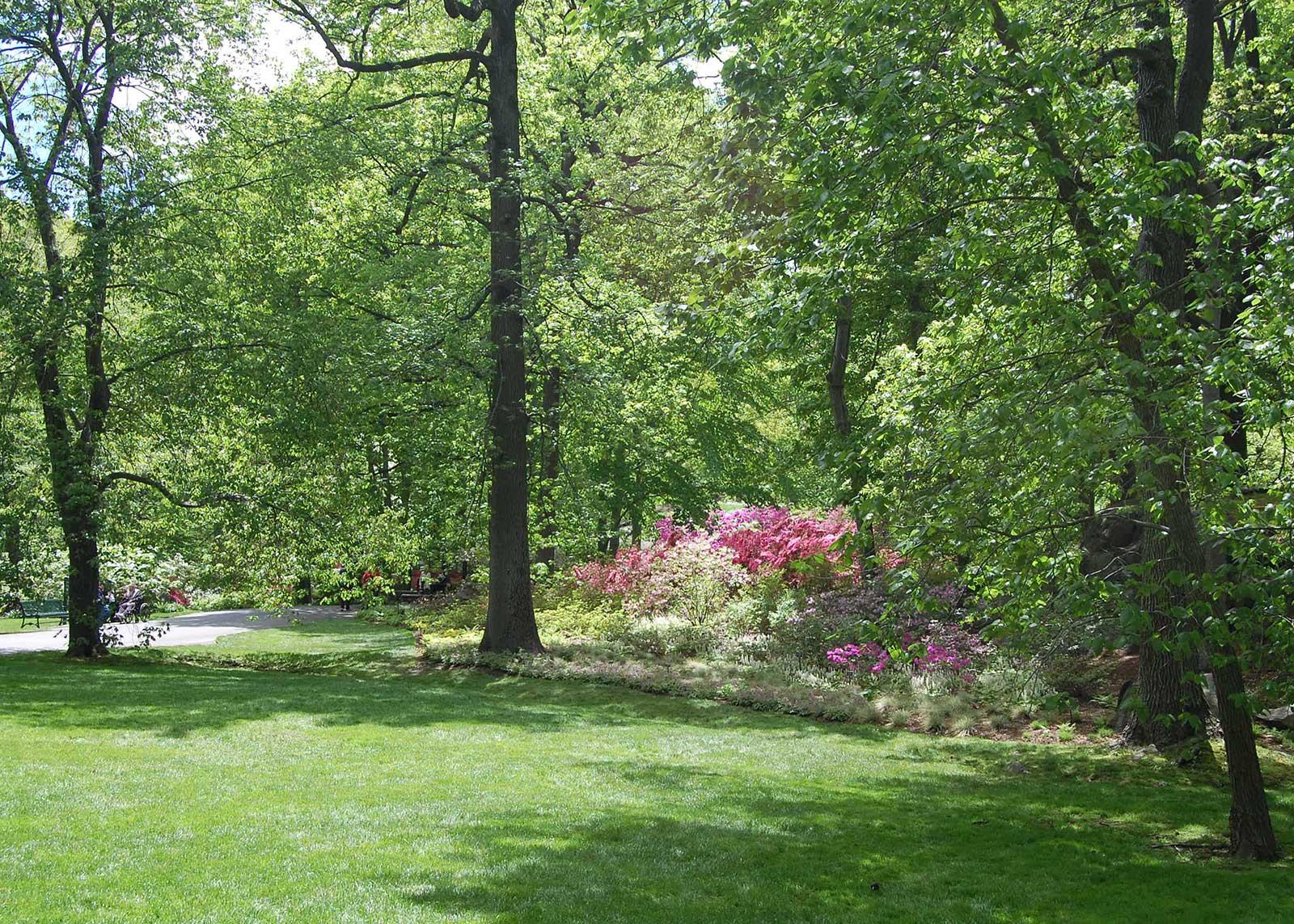 Azalea Garden 3