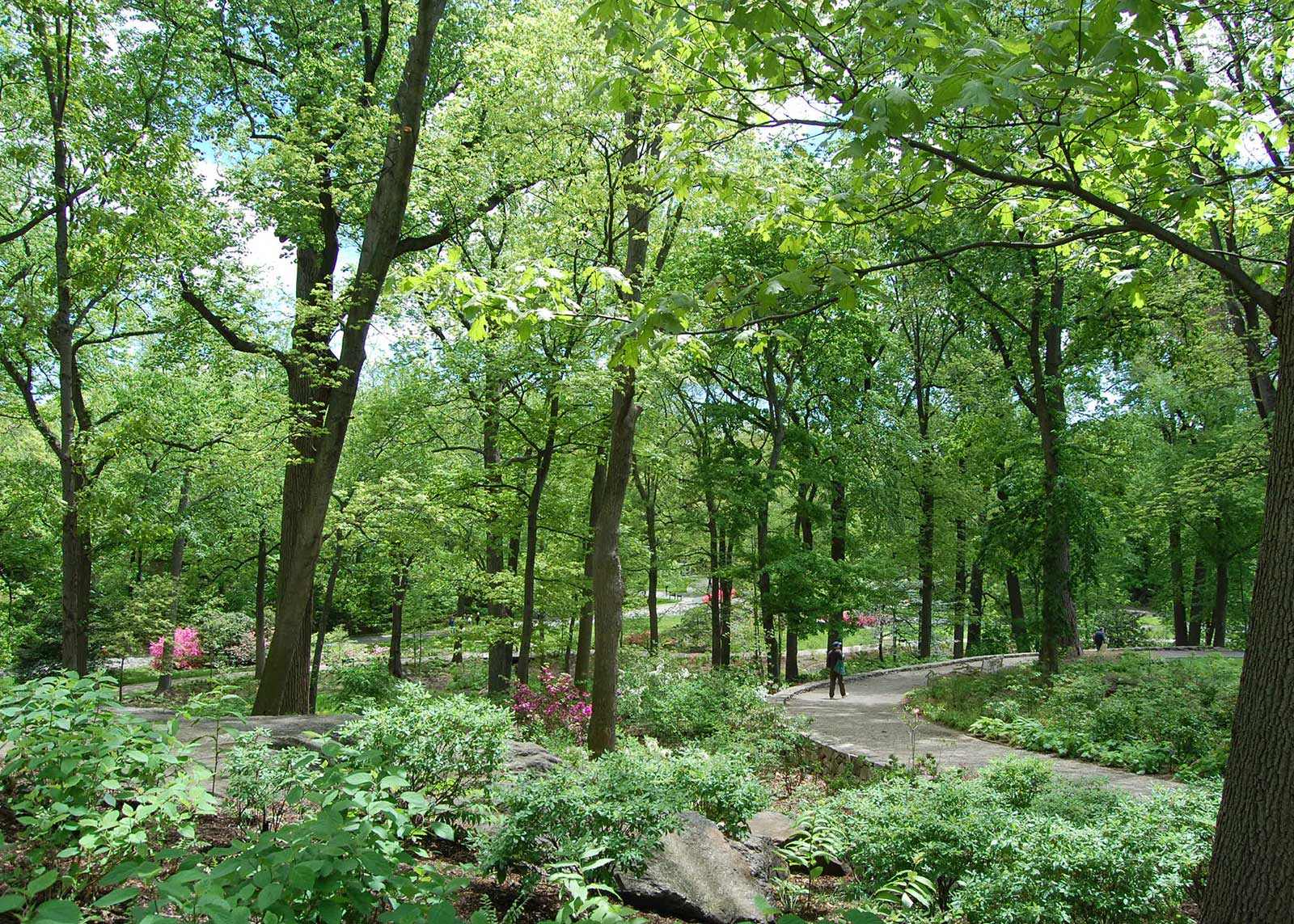 Azalea Garden 5