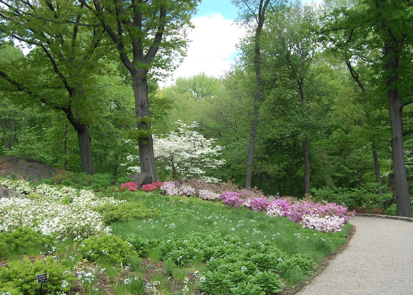Azalea Garden 7