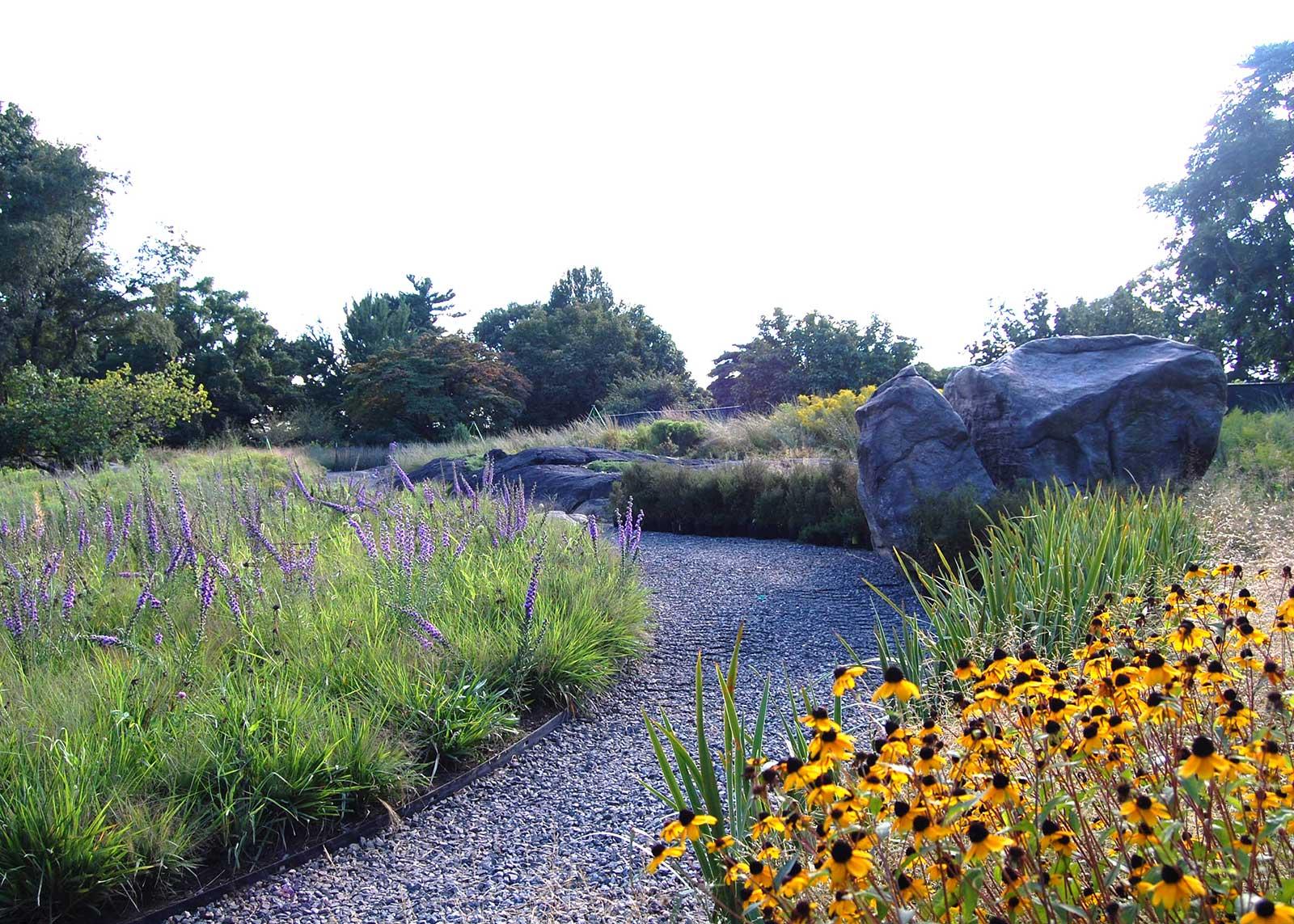 Native Plant Garden 6