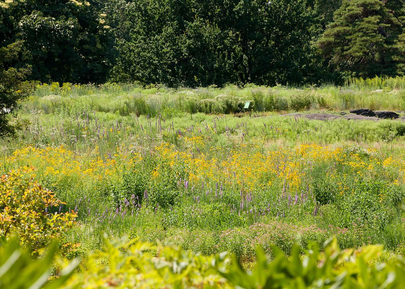 Native Plant Garden 3. The Native Plant Garden  NY   OvS   Landscape Architecture