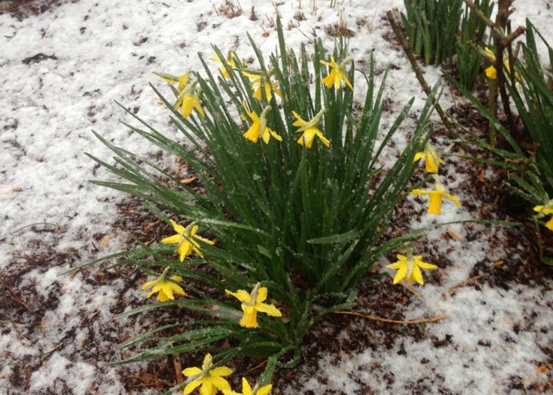 Snow-Day-news