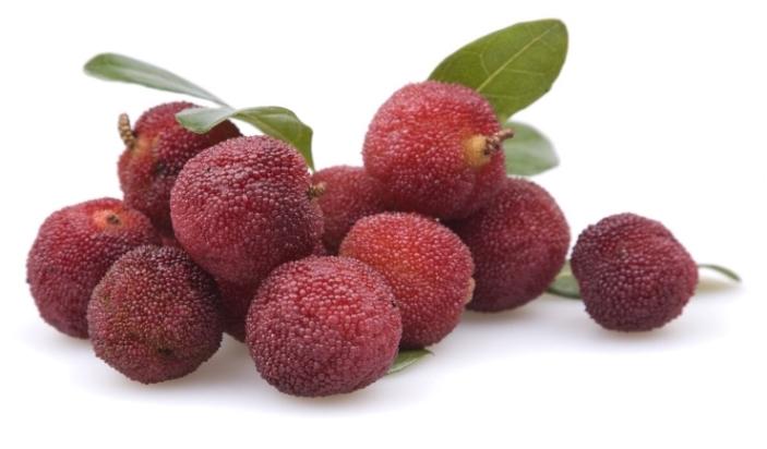 Bayberry-e1438896499173