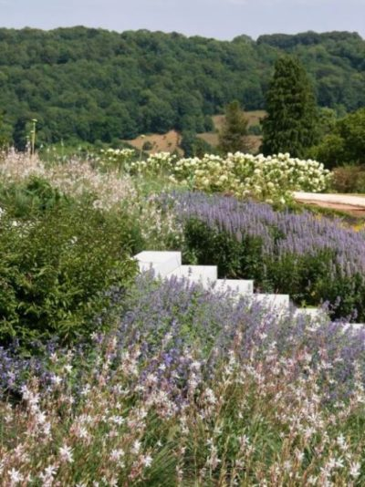 AMiB New American Garden