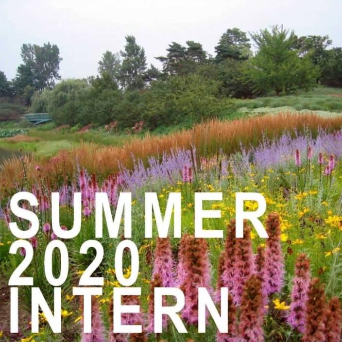 summer 2020 intern